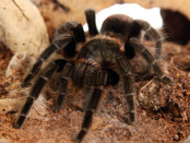 Was ist eine Arachnophobie